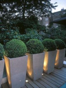Bojes plantados en modernas macetas de cemento con iluminación oculta
