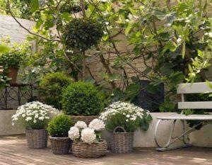 Una mezcla de bojes y flores blancas en cestas.